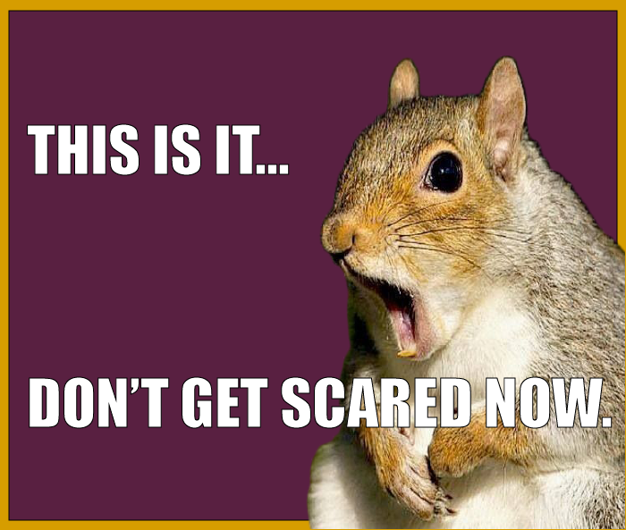"AC squirrel meme ""This is it, don't get scared now"""