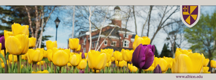 Facebook Timeline cover photo: Tulips