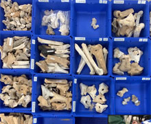 Fragments in the sorting box