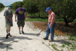 Stan Bronson of the Florida Earth Foundation gave us a tour of the Callery-Judge grove.  One of Florida's largest, this citrus grove is beset by greening's disease, and is in the process of being redeveloped as a residential area