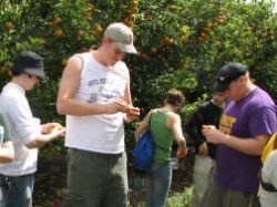 Jeff, John, and Mike sample honey tangerines in the Callery-Judge grove, outside West Palm Beach