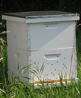 Albion College's Whitehouse Nature Center maintains standard top-bar hives that house Italian honeybees.