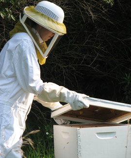 Albion College has a bee club that helps care for hives at Whitehouse Nature Center.