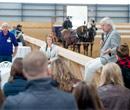 equestrian 130x110