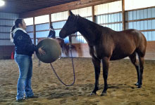 Katie Petchell, '13, works with a horse during her Fall 2012 internship.