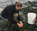 Stephanie Thurner, '17, conducted marine biology research in Anacortes, Wash., in summer 2016 with funding from the National Science Foundation's Research Experience for Undergraduates program.